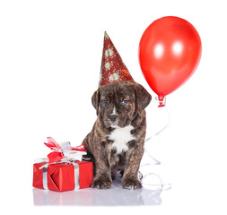 Birthday puppy with party hat, gift box and balloon