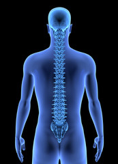 The Human Body - Spine. X-ray effect. Isolated on Black Background