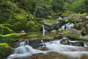 Rainforest river in Yakusugi Land on Yakushima Island, Japan