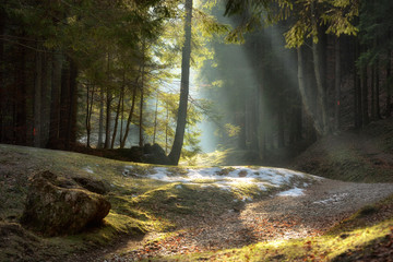 light rays through the trees . late autumn landscape , a walk through the woods near Brasov. Romania. Soft focus, blured background, low key, dark background, spot lighting, and rich Old Masters