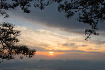 Golden sunset through pine branches.