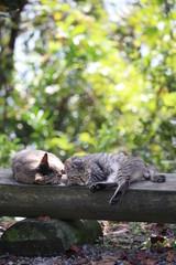 猫のカップル