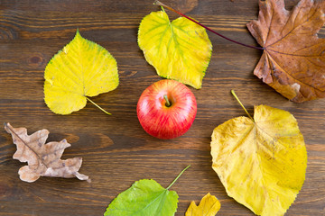 apple and yellow leaves