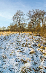Fototapete - Snowless winter. Kaluga region of Russia.