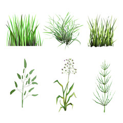 Set green grass. Isolated On White Background