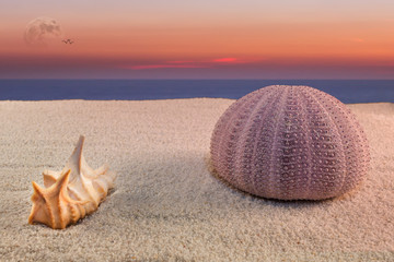 sea urchin and sunset
