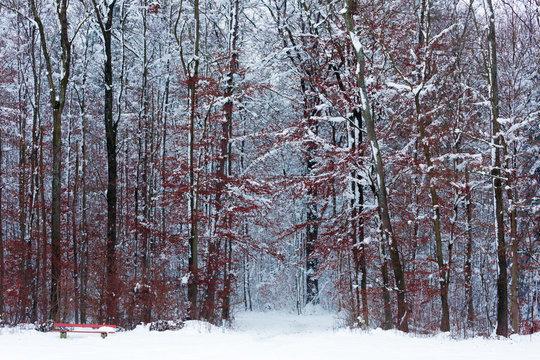 Blutroter Winterwald