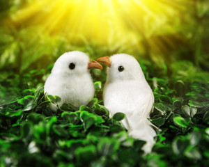 Two little birds in love looking at each other on the background of nature