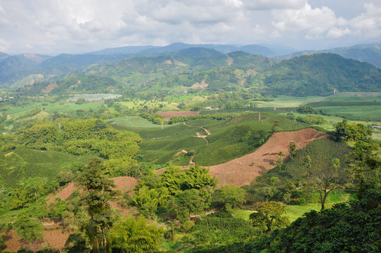 Eje cafetero, where most of the colombian coffee comes from, Col