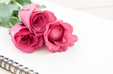 Pink roses with open diary.