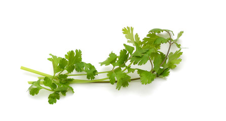 Fresh green parsley also known as coriander on the white background