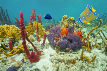 Colors of underwater marine life on the seabed