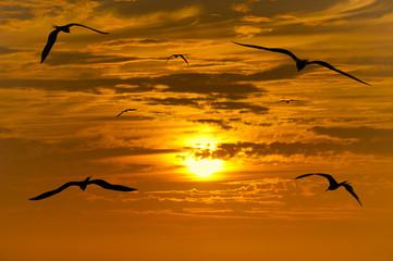 Birds Silhouette
