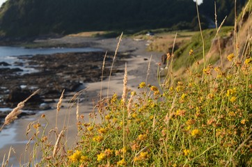 Grass and yellow flowers with a rocky beach in the background.