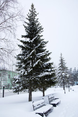 Snow-covered bench under a large spruce