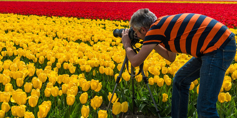 Photographer in a tulip field