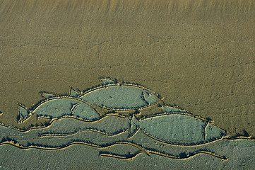 Drawing of fish on sea sand. Fish on sand. Flock of fishes drawn on a beach sand. Drawing on sand