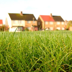 Detail of grass with  blurred houses in background