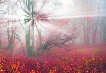 Papiers peints Grenat Autumn in the alpine forest