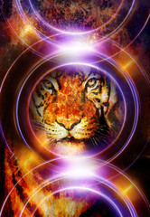 tiger collage on color abstract  background and light circle,  rust structure, wildlife animals, computer collage.
