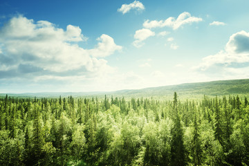 Wall Murals Forest forest in sunny day