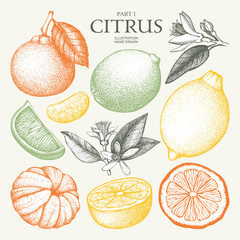 Vintage Ink hand drawn collection of citrus fruits isolated on white background. Vector illustration of highly detailed citrus fruits sketch