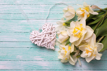 Bright white  and yellow daffodils flowers and decorative heart