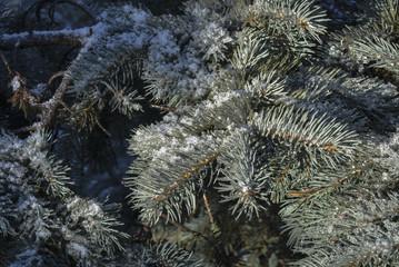 Зимние деревья блестят на солнце покрытые снегом и льдом