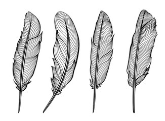 Set of isolated feathers. Vector illustration in black and white.