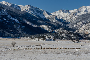 elk mountain muslim Wildlife officials tried to check on the elk wednesday night but were not able to  get a good  wildlife officials returning to check on pregnant elk on lookout  mountain  settlement reached in muslim workers fired from cargill plantthe .
