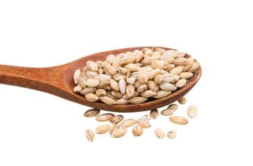 Pearl barley grains isolated