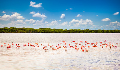 Flamingos at a lagoon Rio Lagartos, Yucatan, Mexico
