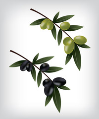 Black and green olives illustration