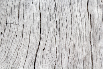 fond texture bois sec, vieux tronc d'arbre blanchi par le temps