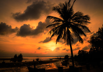 Aluminium Prints Candy pink Silhouette coconut palm tree near beach at sunset