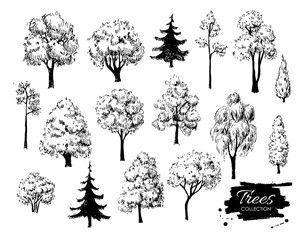 Big set of hand drawn tree sketches. Artistic drawing