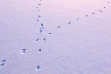 Animal tracks crossing on snow