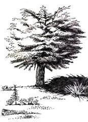 graphic black and white tree