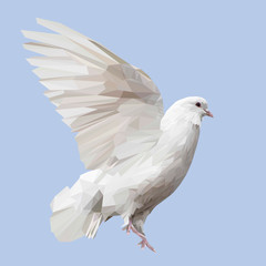 White Pigeon bird animal low poly design. Triangle vector illustration.