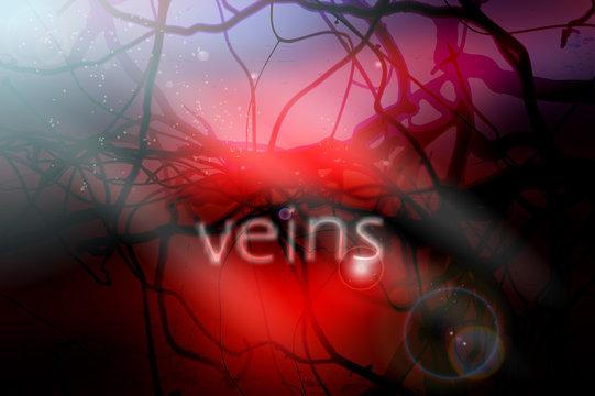 blood vessels vector illustration