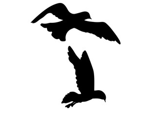 Seagull Bird Silhouette Vector EPS 10