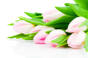 Spring flower pink tulips bouquet isolated on white background.