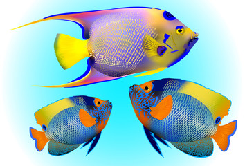 angelfish, one of mostly colorful coral fishes. Vector illustration.