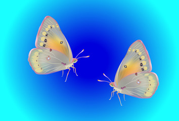 realistic vector butterflies on blue background