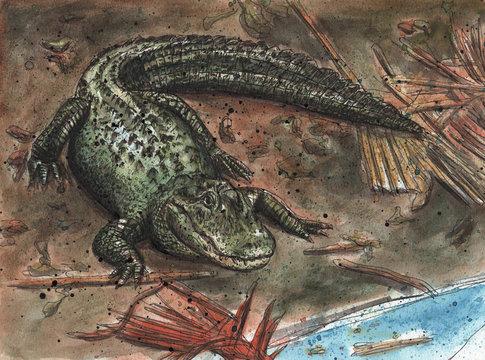 Alligator on a river bank