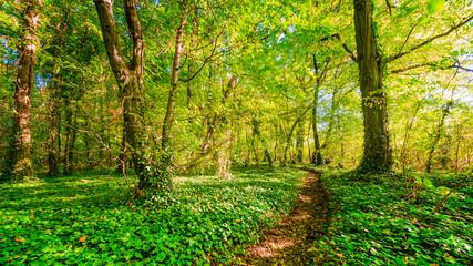 Waldweg im Sonnenschein