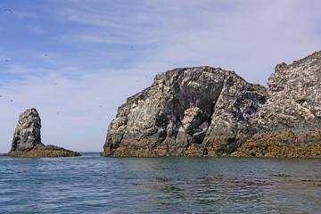 Bird Nesting Island in the Summer