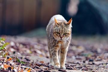Прогулка домашнего зверя.