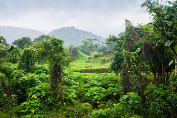 Jungle Vietnam