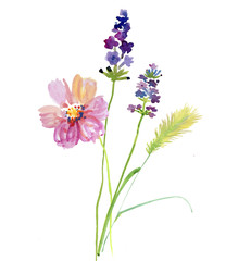 Beautiful flowers, Watercolor painting